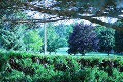 Árvore de bordo vermelho em um parque residencial fotos de stock