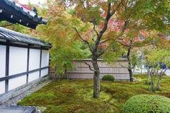 Árvore de bordo vermelho japonesa durante o outono no jardim no templo de Enkoji em Kyoto, Japão Foto de Stock Royalty Free