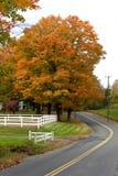 Árvore de bordo vibrante da folha de queda foto de stock