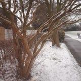 Árvore de Brown foto de stock royalty free