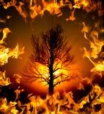 A árvore de Bush ardente foto de stock