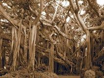 Árvore de cabeça para baixo Imagens de Stock