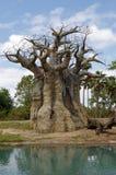 Árvore de cabeça para baixo foto de stock