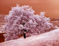 Árvore de carvalho 01 Fotografia de Stock Royalty Free