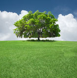 Árvore de carvalho Fotos de Stock