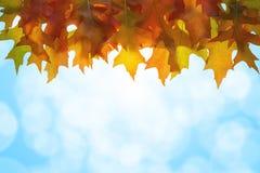 A árvore de carvalho de suspensão sae do fundo do céu foto de stock royalty free