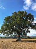 Árvore de carvalho em um campo ploughed fotografia de stock royalty free