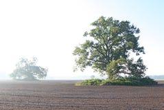 Árvore de carvalho em um campo ploughed Fotografia de Stock