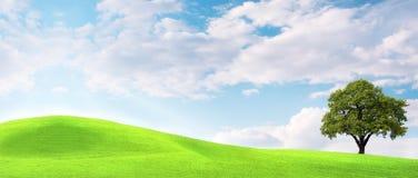 Árvore de carvalho em um prado Imagem de Stock Royalty Free