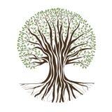Árvore de carvalho grande Foto de Stock Royalty Free