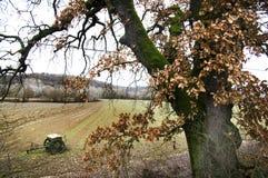 Árvore de carvalho grande no campo de tuscan Foto de Stock Royalty Free