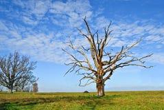 Árvore de carvalho inoperante imagem de stock royalty free