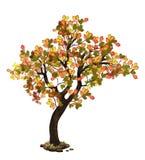 Árvore de carvalho na queda ilustração stock