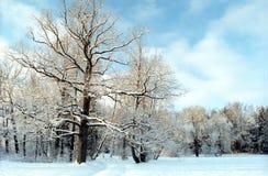 Árvore de carvalho no parque do inverno foto de stock