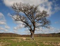 Árvore de carvalho só por um trajeto meandering imagens de stock royalty free