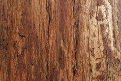 Árvore de casca imagens de stock royalty free