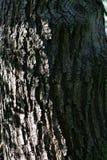 Árvore de casca da pele fotos de stock royalty free
