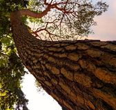 Árvore de casca na floresta fotos de stock