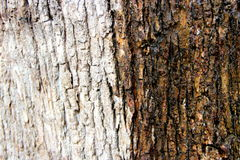 Árvore de casca nas cores Fotografia de Stock
