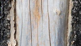 árvore de casca velha saída Imagens de Stock