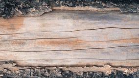 árvore de casca velha saída Foto de Stock Royalty Free