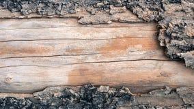 árvore de casca velha saída Foto de Stock