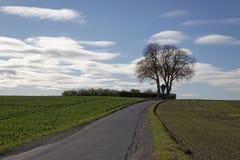 Árvore de castanha no outono, (hippocastanum do Aesculus), rua através dos campos em Iburg-Glane mau, terra de Osnabruecker, Alema Fotos de Stock Royalty Free