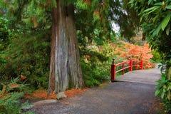 Árvore de cedro e passadiço com trilho vermelho Imagem de Stock Royalty Free