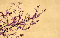Árvore de cereja Foto de Stock