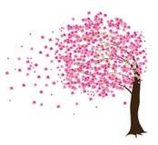 Árvore de cereja Imagem de Stock