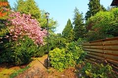 Árvore de cereja cor-de-rosa de florescência no parque Fotografia de Stock Royalty Free
