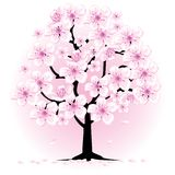 Árvore de cereja da flor Imagens de Stock Royalty Free