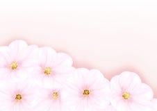 Árvore de cereja da flor Fotografia de Stock Royalty Free