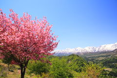 Árvore de cereja e cumes de Japão Fotografia de Stock