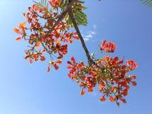 Árvore de chama Fotos de Stock Royalty Free