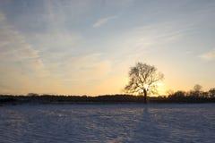 Árvore de cinza do inverno com neve Fotografia de Stock