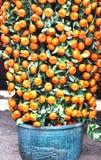 Árvore de citrino imagem de stock
