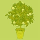 Árvore de citrino da tangerina, da laranja ou do limão do citrino em um potenciômetro Imagens de Stock Royalty Free