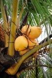 Árvore de coco imagem de stock royalty free
