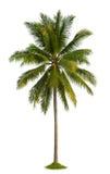 Árvore de coco Fotos de Stock