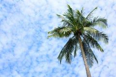 Árvore de coco imagem de stock