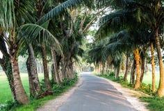 Árvore de coco com opinião da rua Fotos de Stock Royalty Free