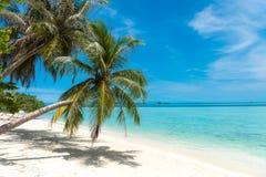 Árvore de coco da palmeira na praia branca da areia fotografia de stock royalty free