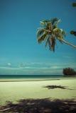 Árvore de coco e cama de madeira da praia na areia branca com o mar azul bonito imagem de stock royalty free