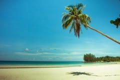 Árvore de coco e cama de madeira da praia na areia branca com o mar azul bonito Imagens de Stock