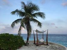 Árvore de coco e, Maldivas imagem de stock royalty free