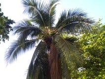 Árvore de coco em Tailândia sob o sol imagens de stock