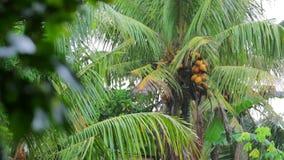 árvore de coco exótica no dia chuvoso video estoque