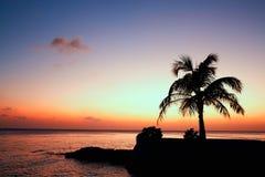 Árvore de coco, Maldivas fotos de stock