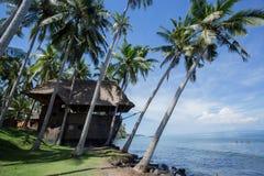 Árvore de coco na linha costeira Fotos de Stock Royalty Free